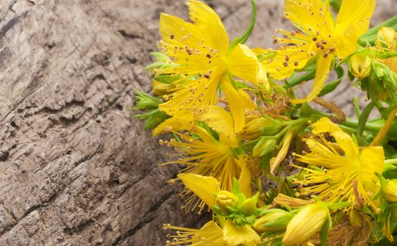 St John's Wort Extract May Help Manage Postmenopausal Symptoms and Depression: By Dr Peter Alphonse, PhD