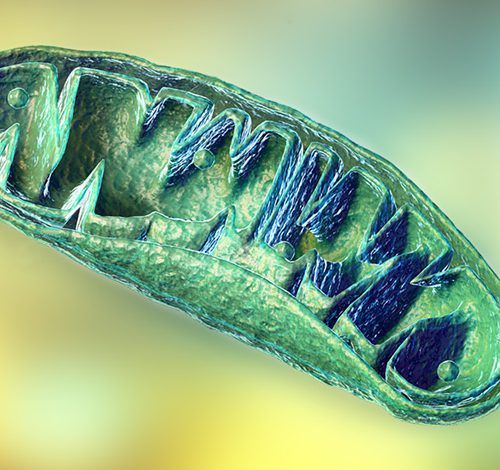 The role of mitochondria during viral infections by Dr. David W Lescheid, PhD