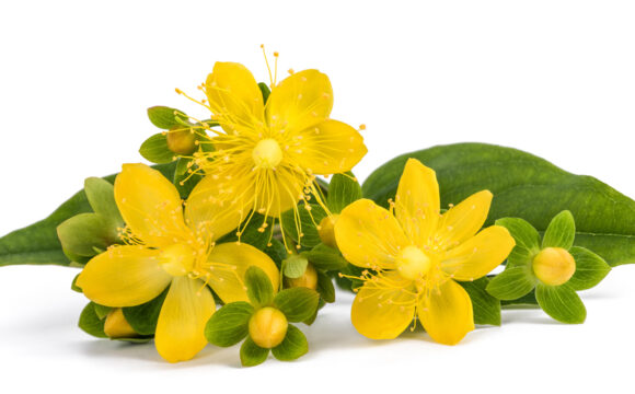 Can St John's Wort be combined with Prescription Medications? By Dr Philip Rouchotas, MSc, ND